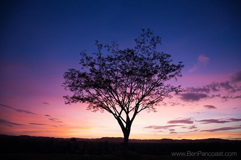 Random Tree_FB
