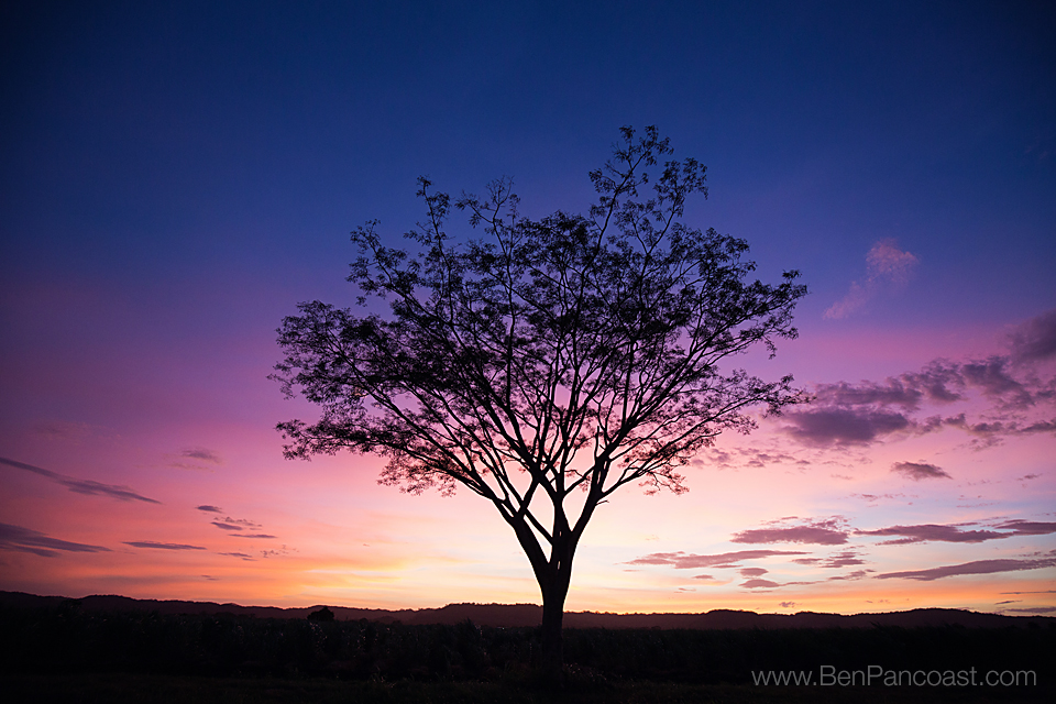 A Lonely Tree In Costa Rica