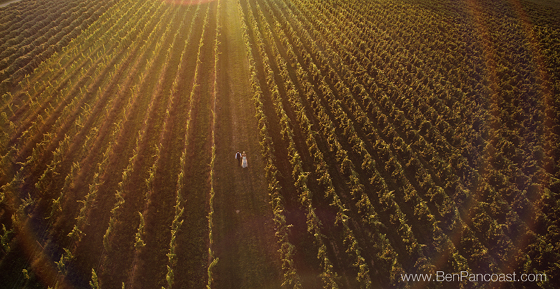 Aerial, drone photo, vineyard, 12 Corners, southwest Michigan, wedding